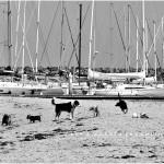 LD-Laughlin-Photography-City-of-Dogs-2-03