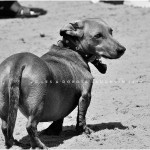 LD-Laughlin-Photography-City-of-Dogs-2-04